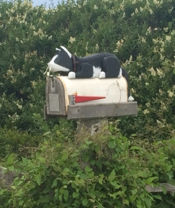 CatMailboxNantucket